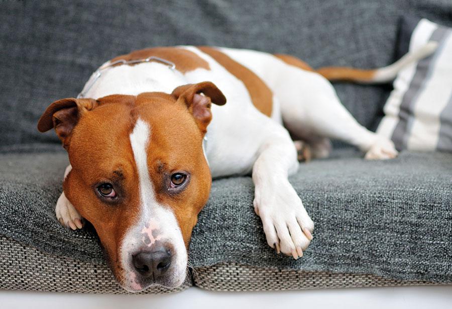 your dog welcher hund passt zu mir familienhunde. Black Bedroom Furniture Sets. Home Design Ideas