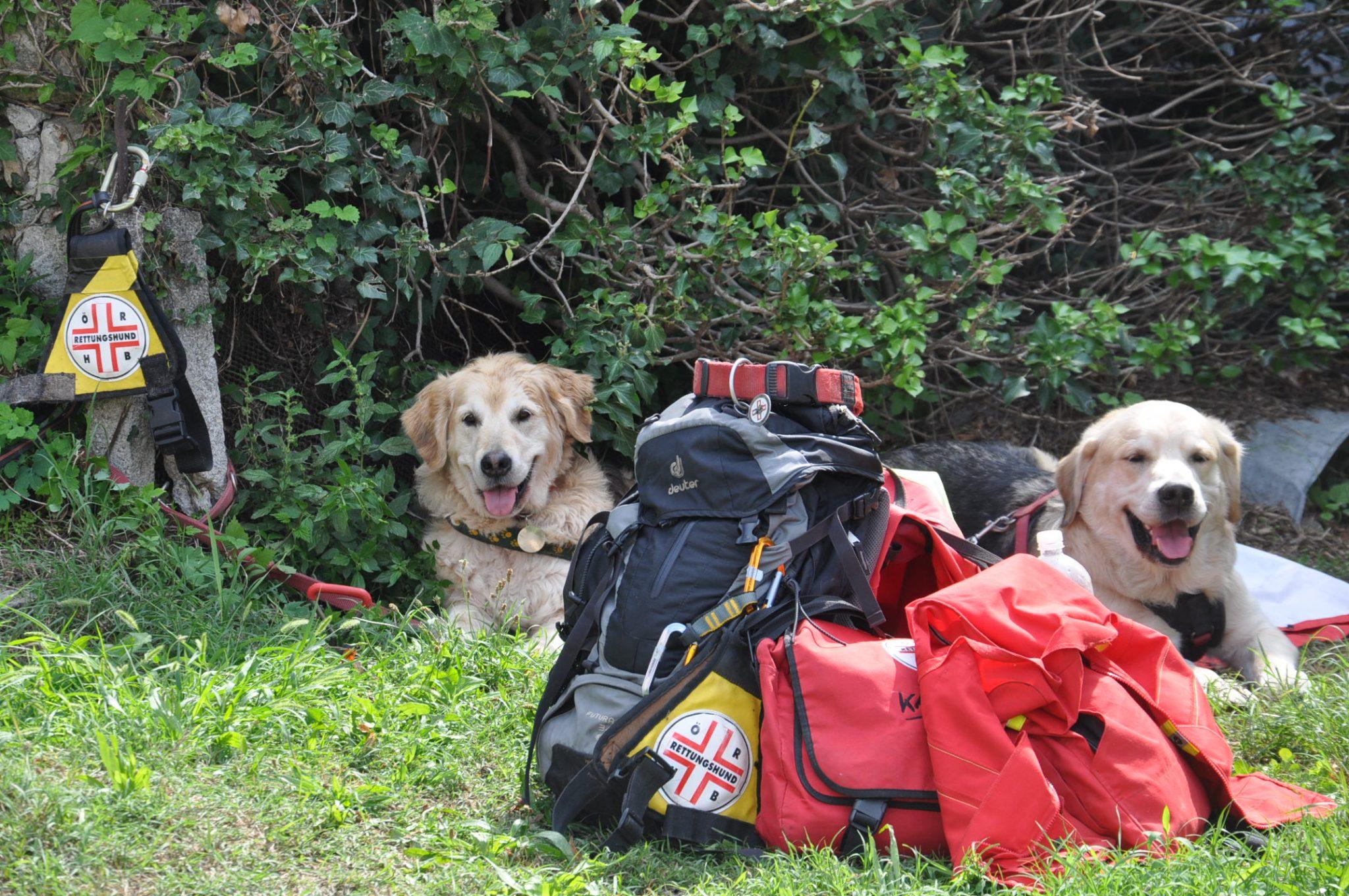 Soca Dog Training