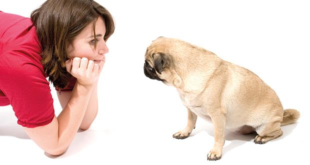 kommunikation der hunde