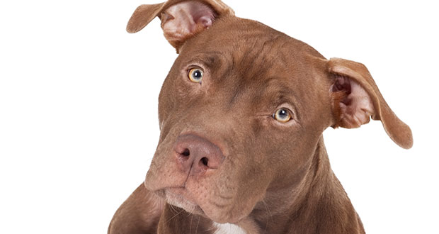 hund akzeptiert herrchen nicht