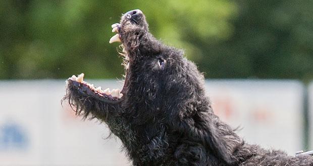 bannerbeissendehunde