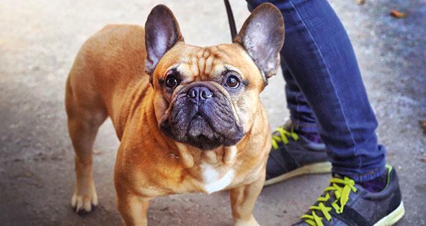Resultado de imagen para french bulldog Hund Spaß