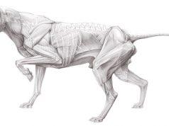 systemerkrankungen des skeletts