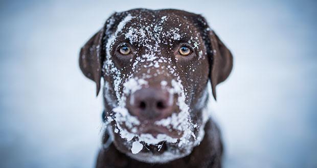 hausmittel gegen winterleiden your dog hundemagazin. Black Bedroom Furniture Sets. Home Design Ideas